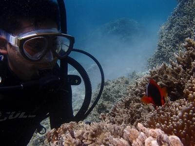 お知らせ④ ダイビングデータ