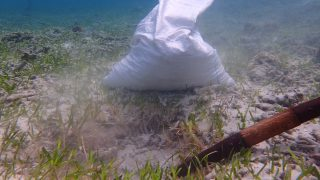 海草藻場調査