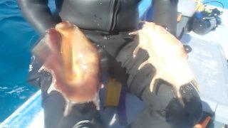 海草藻場調査③
