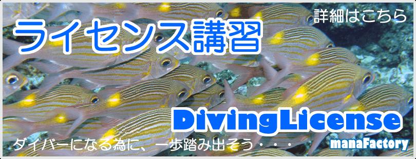 宮古島でダイビングライセンス講習/マナファクトリー
