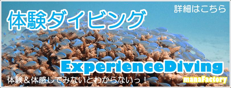 宮古島で体験ダイビング/マナファクトリー