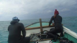 海草藻場調査④